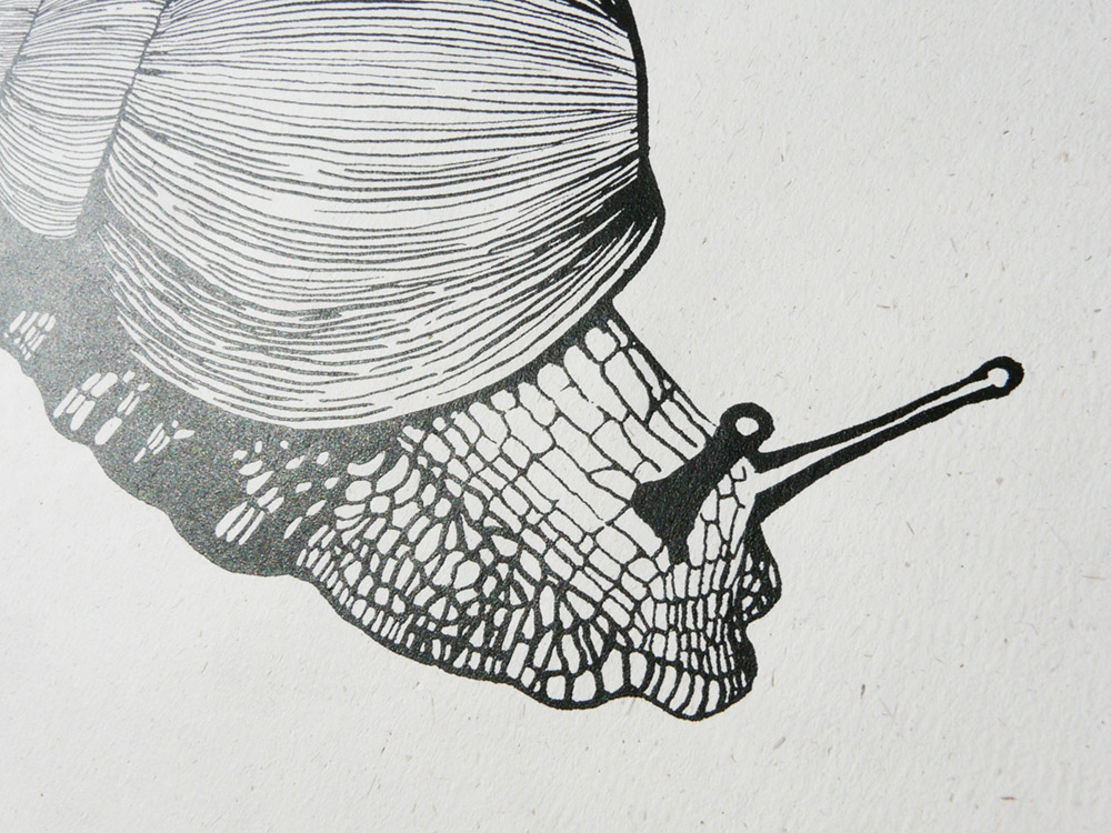 African Land Snail print