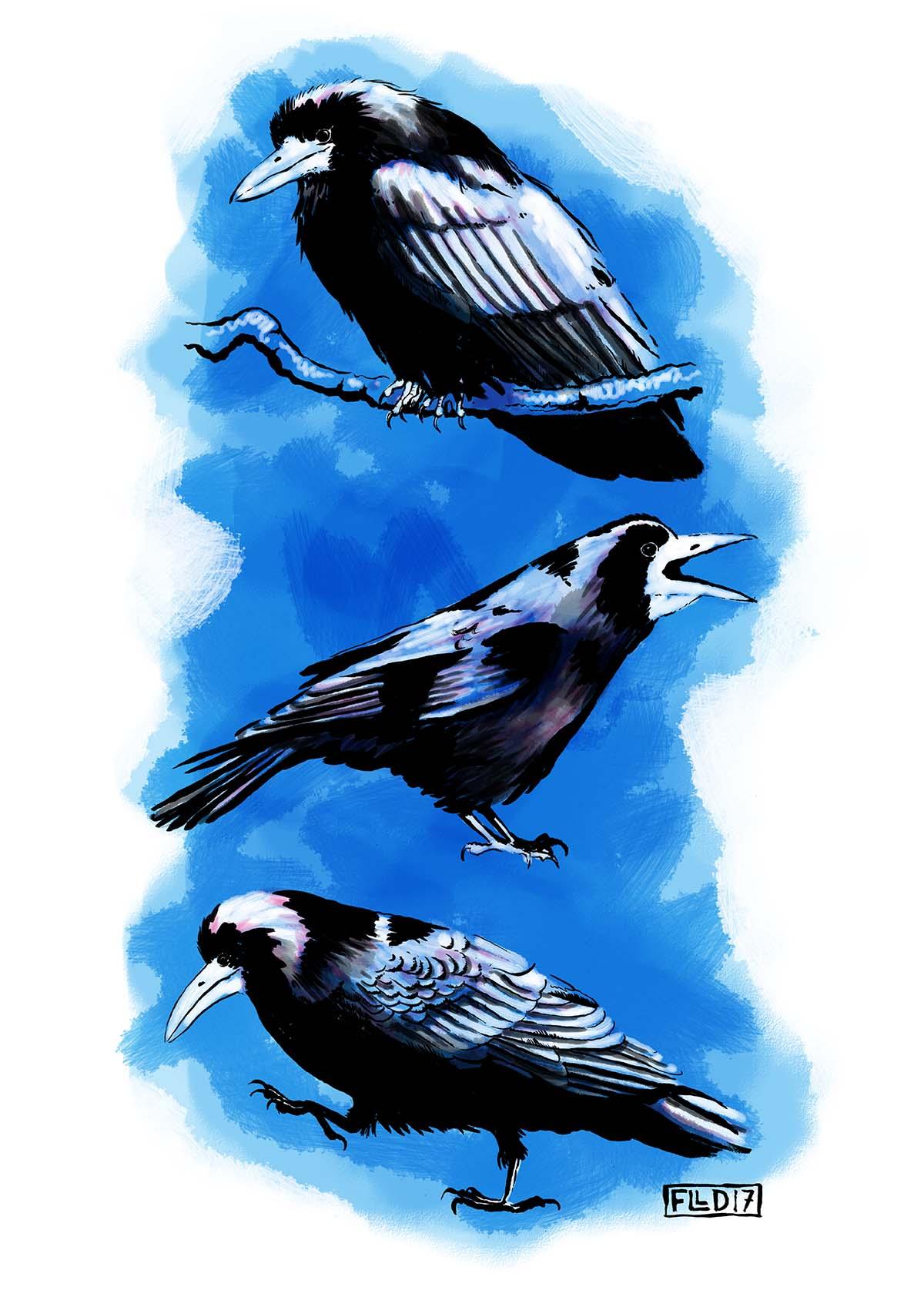 rook crow corvid screen art print pink blue black